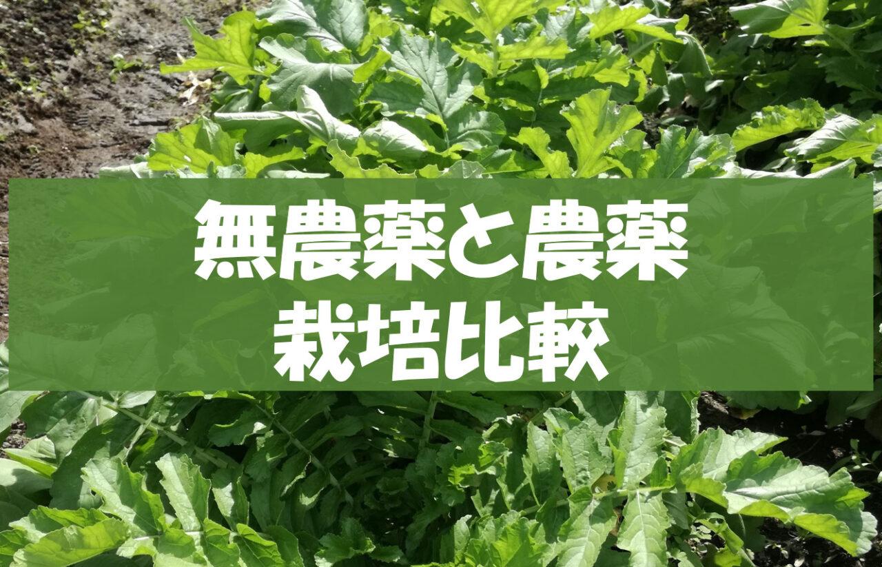 無農薬と農薬栽培比較